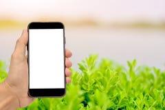 Рука держа умный монтаж телефона Стоковое Фото