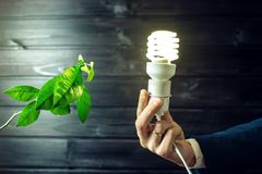 Рука держа электрическую лампочку рядом с зеленым деревом Стоковые Фото
