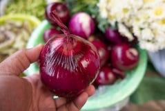 Рука держит свежий красный лук на рынке Ла Shangri влажном стоковое фото rf
