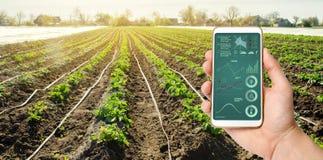 Рука держит смартфон с системным руководством оросительной системы и аналитиком данных на состоянии кустов картошки стоковые фото
