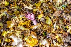 Рука девушки или мальчика вставляя из кучи падения сгребла листья стоковые фотографии rf