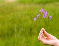 Рука девушки с колоколом цветка Стоковое Изображение RF