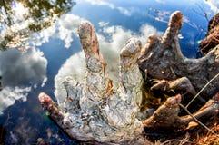Рука дерева Стоковое Изображение RF