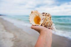 Рука держа большой seashell на тропической предпосылке пляжа стоковое изображение rf