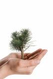 Рука держа дерево на глобусе Стоковое фото RF