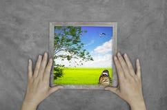 Рука держа изображения Стоковое Изображение