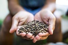 Рука держа кофе Стоковые Фото
