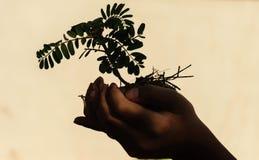Рука держа меньшее дерево стоковые фотографии rf
