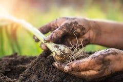Рука держа лук весны Стоковая Фотография RF