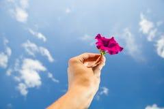 Рука держа цветок, предпосылку неба стоковые фото