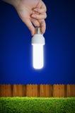 Рука держа электрическую лампочку с кустарником Стоковое Изображение RF