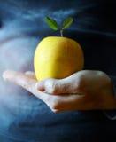 Рука держа яблоко Стоковое Изображение
