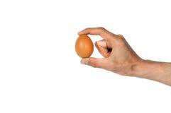 Рука держа яичко цыпленка Стоковые Фотографии RF
