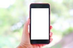 Рука женщины держа белый Smartphone с пустым экраном Стоковые Изображения