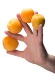 Рука женщины держа 4 абрикоса Стоковая Фотография RF