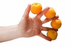 Рука женщины держа 4 абрикоса Стоковое Изображение RF