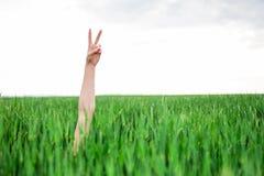 Рука женщины делая знак победы Стоковое Изображение RF
