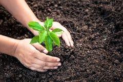 Рука женщины засаживая молодое дерево на черной почве Стоковая Фотография