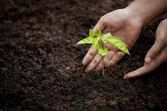 Рука женщины засаживая молодое дерево на черной почве Стоковое Изображение