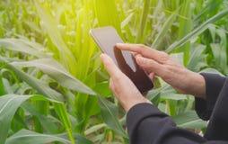 Рука женщины используя умный телефон, личную болтовню, и социальные средства массовой информации Стоковые Фото