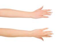 Рука женщины красоты над белизной Стоковое Изображение RF