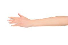 Рука женщины красоты Стоковое Фото