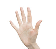 Рука женщины (ладонь) стоковая фотография rf