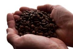 Рука женщины пригорошня кофейных зерен - силуэт стоковое фото rf