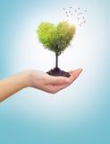Рука женщины держа сердце дерева Стоковая Фотография