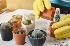 Рука засаживая кактус Стоковое фото RF