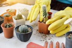 Рука засаживая кактус Стоковое Фото