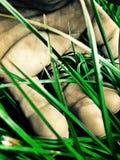 рука зеленого цвета травы Стоковая Фотография RF