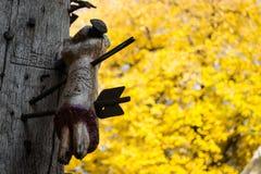 Рука и дерево Стоковая Фотография RF