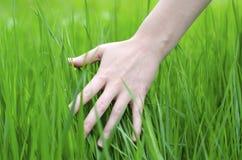 Рука и трава стоковые фотографии rf