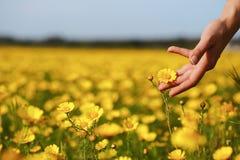 Рука и цветок женщины Стоковое Фото
