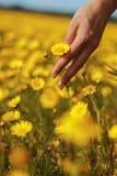 Рука и цветок женщины Стоковые Фотографии RF