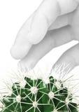 рука кактуса Стоковая Фотография RF