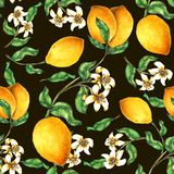 Рука картины лимона безшовная покрашенная в акварели иллюстрация штока