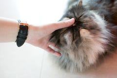 Рука касаясь коту спать Стоковое Фото