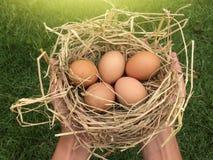 Рука крупного плана держа яичка цыпленка на сене стоковое изображение rf