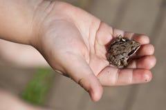 рука лягушки ребенка Стоковые Изображения