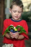рука мальчика его lorakeets 2 удерживания Стоковое Фото