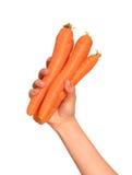 Рука морковей стоковые фото