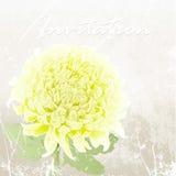 Рука нарисованная желтой хризантемы иллюстрация Стоковое фото RF