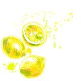 Рука нарисованная изолированных лимонов также вектор иллюстрации притяжки corel Стоковое фото RF