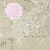 Рука нарисованная розовой хризантемы иллюстрация штока