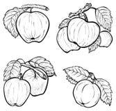 рука нарисованная яблоками Стоковое Фото