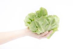Рука на группе в составе овощ салата на белой предпосылке Стоковое Изображение RF