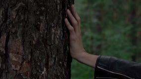 Рука на дереве сток-видео