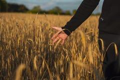Рука на пшеничном поле стоковая фотография